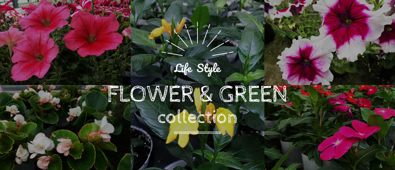 Life Style FLOWER & GREEN collection
